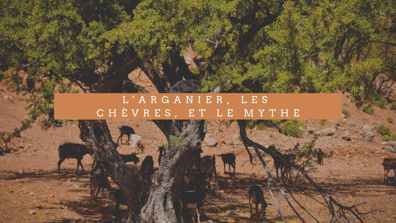 L'Arganier, Les chèvres, et Le mythe