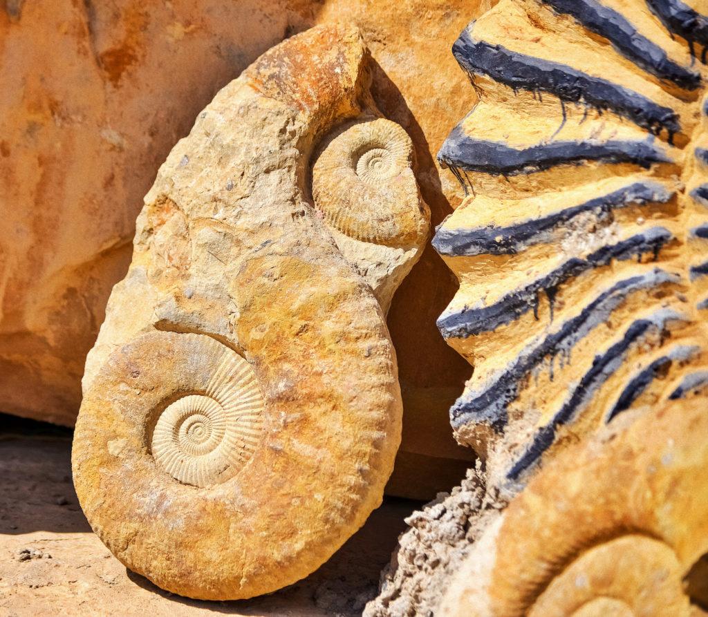 fossiles Souss Massa
